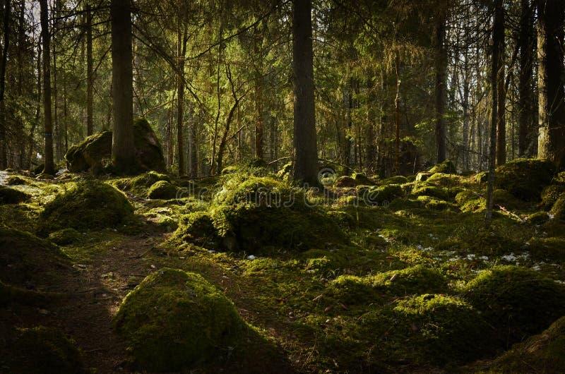 Fondo della foresta fotografia stock libera da diritti