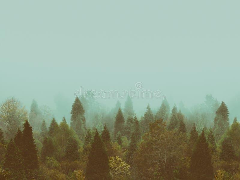 Fondo della foresta d'annata in autunno con copyspace fotografie stock