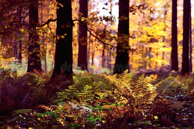 Fondo della foresta di autunno fotografia stock