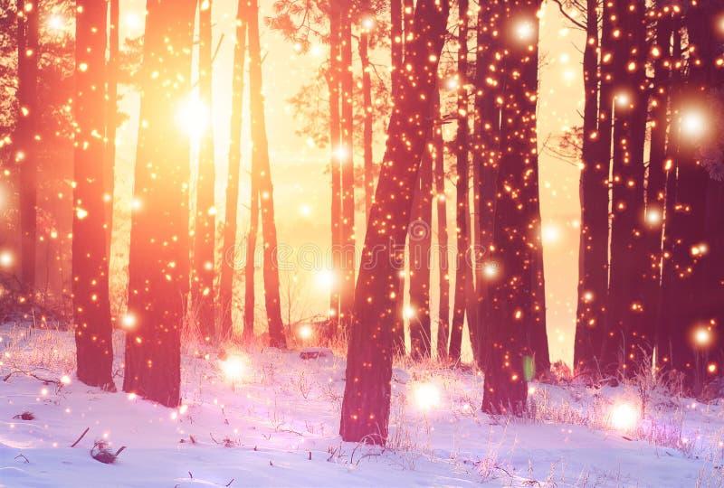 Fondo della foresta di inverno Alba viva nei raggi di sole luminosi della foresta nevosa di inverno attraverso gli alberi in terr fotografie stock libere da diritti