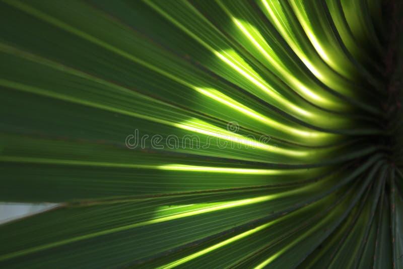 Fondo 3 della fronda della palma fotografia stock libera da diritti