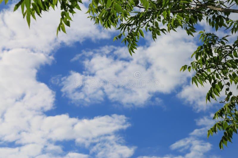 Fondo della natura con i rami di albero e del cielo blu fotografie stock