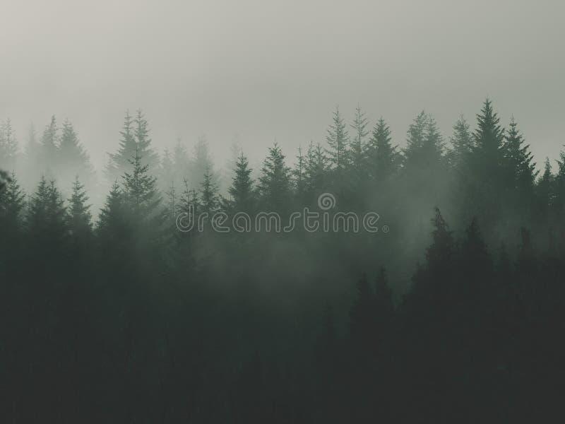 Fondo della natura con la foresta lunatica immagini stock libere da diritti