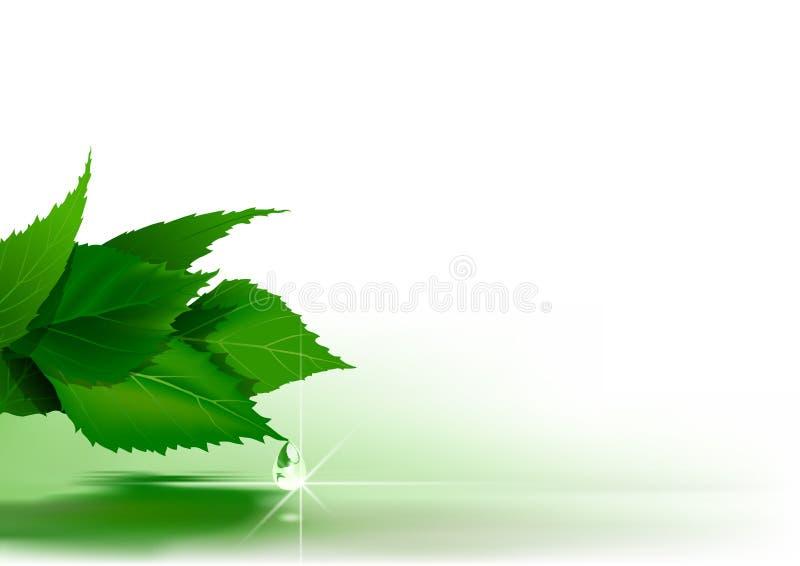 Fondo della natura con le foglie verdi illustrazione di stock