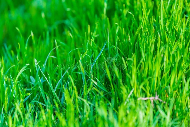 Fondo della natura dell'erba verde Foto del primo piano fotografie stock libere da diritti