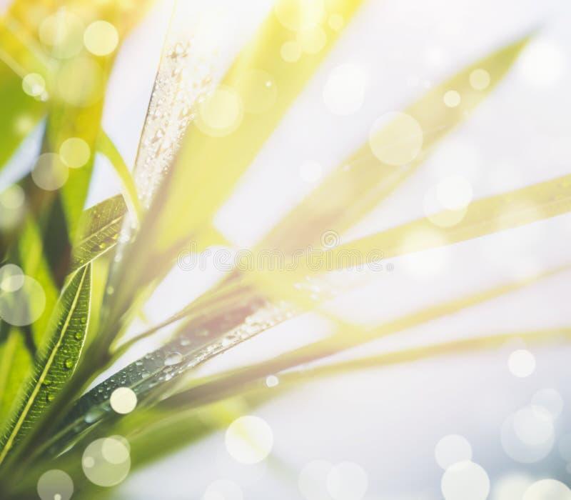 Fondo della natura di estate con la fine su delle foglie verdi, sole fotografie stock