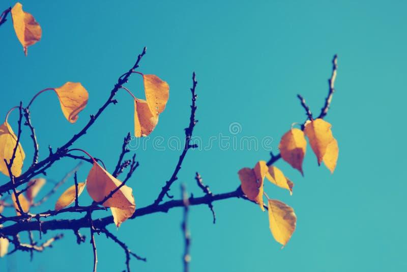 Fondo della natura della foglia di autunno immagine stock