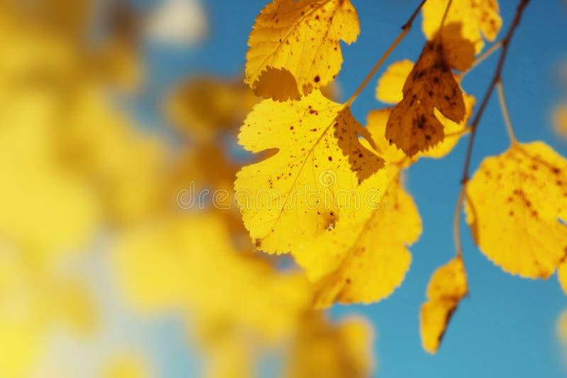 Fondo della natura della foglia di autunno immagine stock libera da diritti