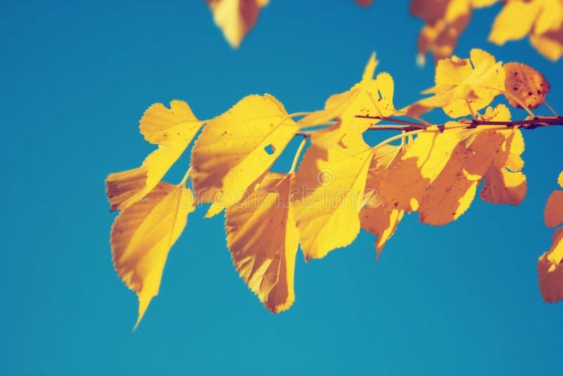 Fondo della natura della foglia di autunno immagini stock