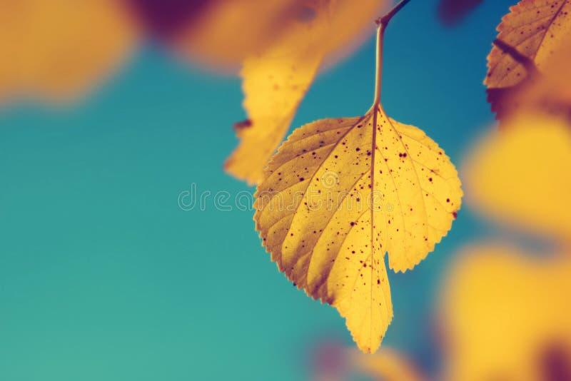 Fondo della natura della foglia di autunno fotografie stock libere da diritti