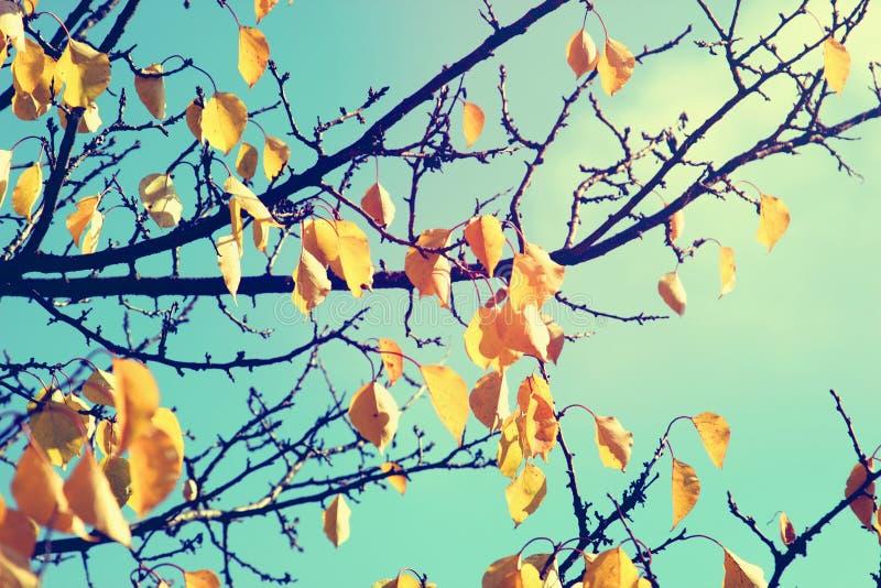 Fondo della natura della foglia di autunno fotografia stock