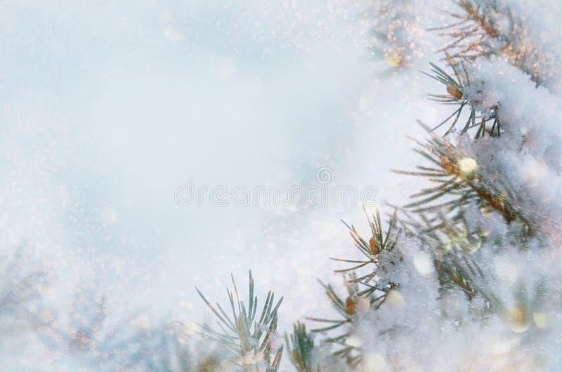 Fondo della neve di inverno di Natale Rami attillati blu coperti di fiocchi di neve e di spazio della copia con il contesto vago  immagine stock