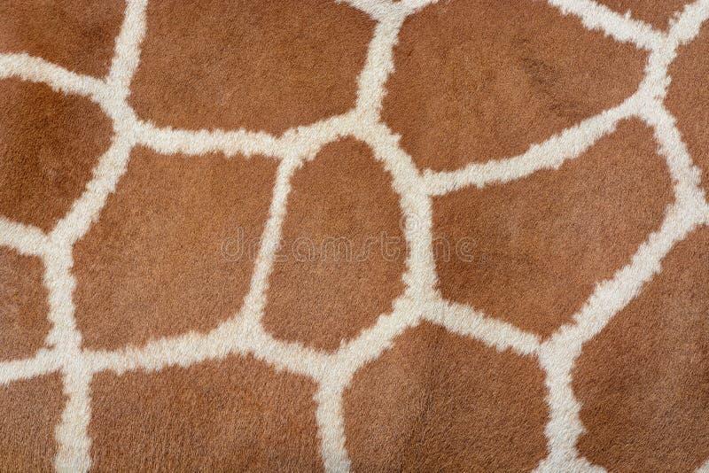 Fondo della pelle animale della struttura modellata della pelliccia su una giraffa africana fotografia stock libera da diritti