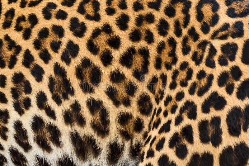 Fondo della pelliccia del leopardo fotografia stock