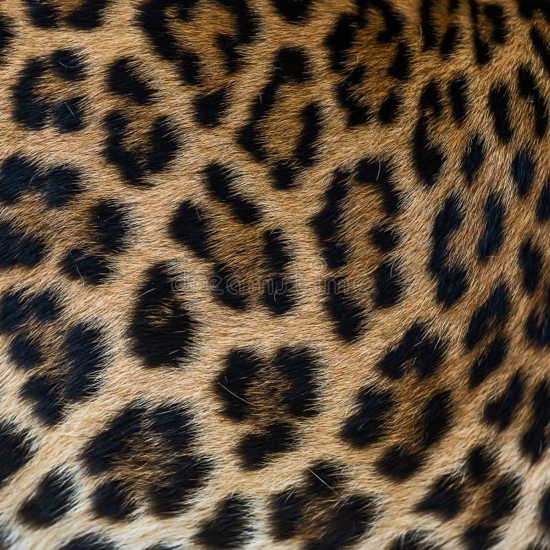 Fondo della pelliccia del leopardo immagine stock