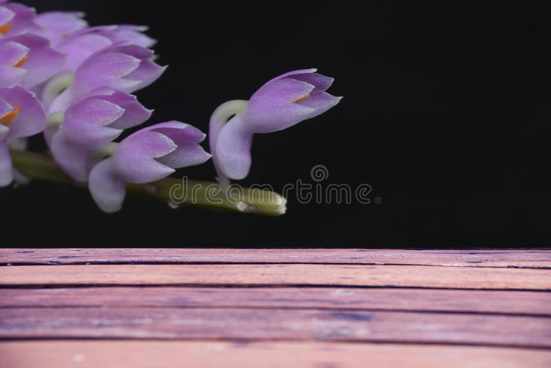 Fondo della plancia con i fiori neri fotografia stock libera da diritti