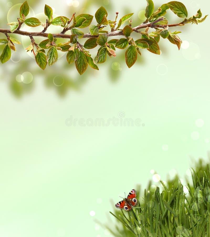 Fondo della primavera con erba, farfalle e immagini stock libere da diritti