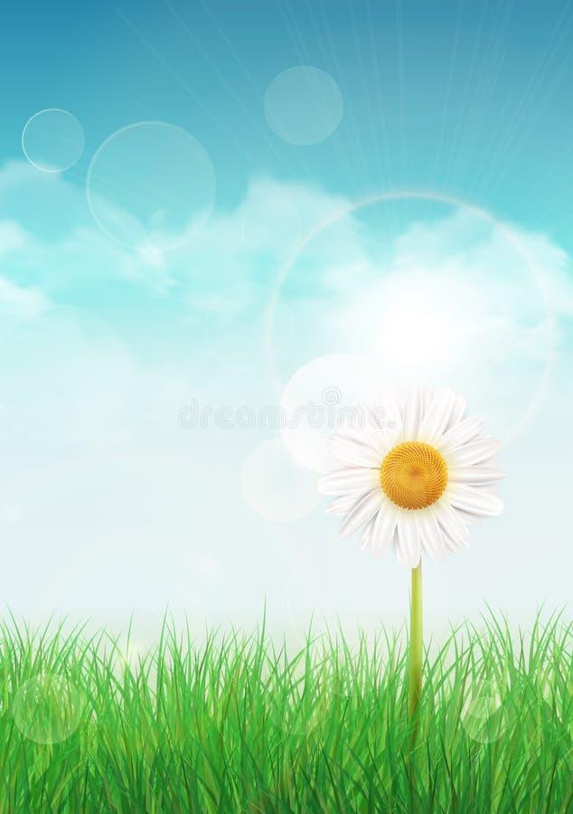 Fondo della primavera con erba verde ed il cielo illustrazione vettoriale