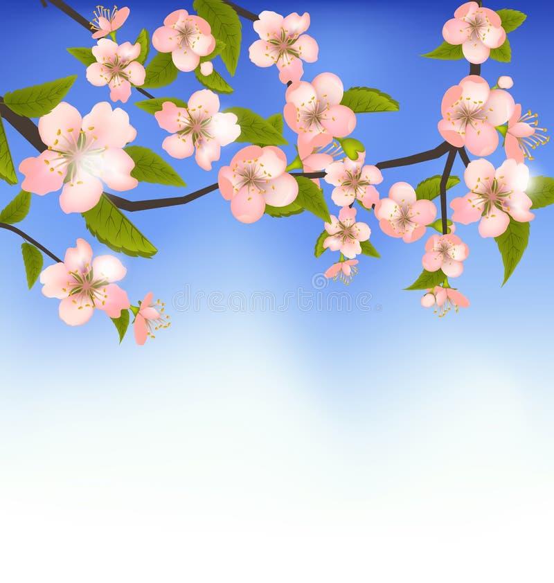 Fondo della primavera di un ramo di albero sbocciante con i fiori illustrazione di stock