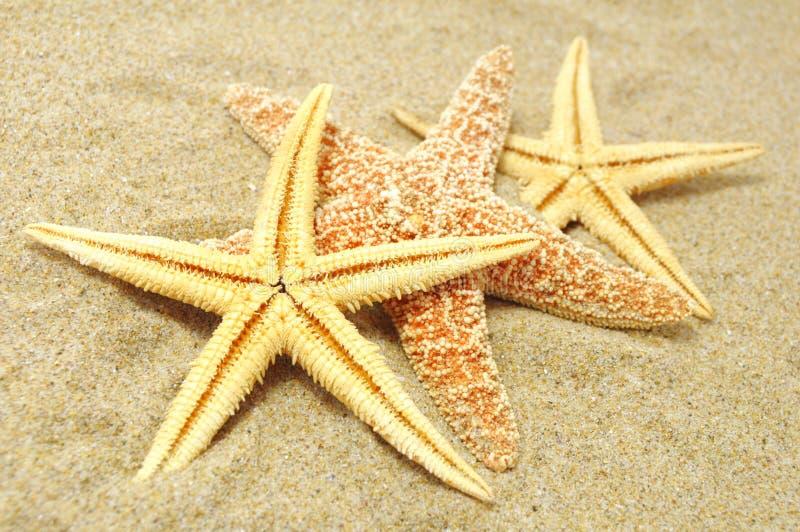 Fondo della spiaggia fotografie stock