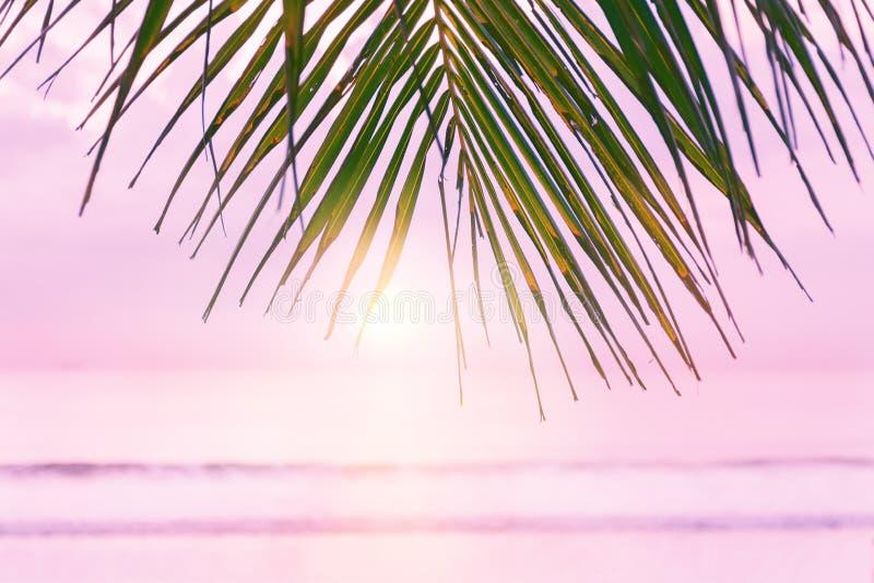 Fondo della spiaggia con la palma Foglii di palma tropicali della spiaggia fotografie stock libere da diritti
