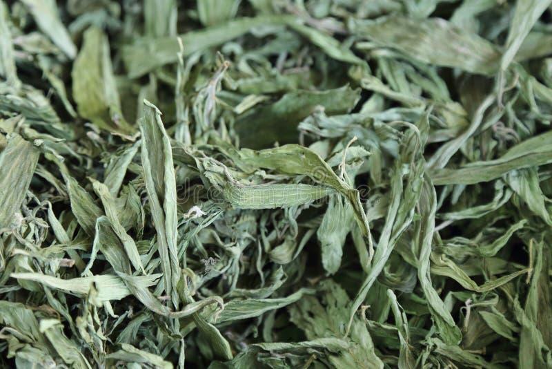 fondo della stevia secca fotografia stock