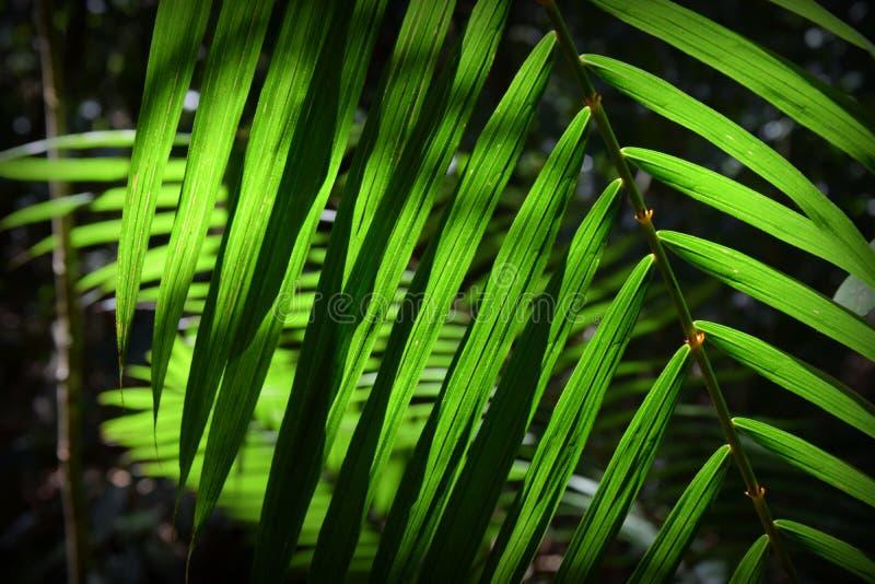 Fondo delle foglie di palma fotografie stock