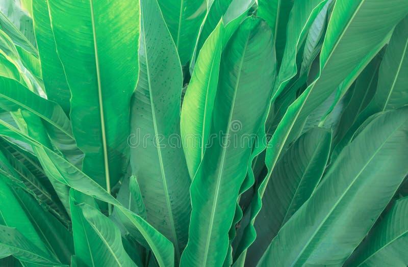 Fondo delle foglie verdi, disposizione creativa fatta delle foglie verdi Florida fotografie stock