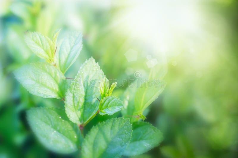 Fondo delle foglie verdi, disposizione creativa fatta delle foglie verdi Disposizione piana immagini stock