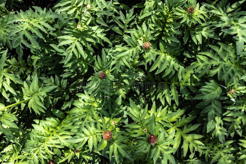 Fondo delle foglie verdi fotografie stock libere da diritti