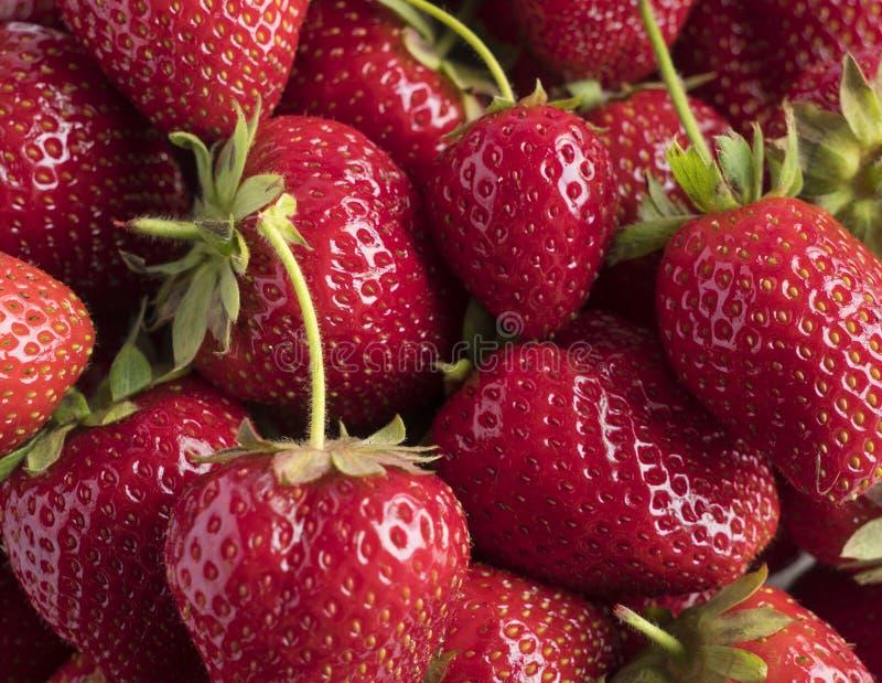 Fondo delle fragole fresche Fragole mature Primo piano maturo delle bacche Varie bacche fresche di estate immagini stock libere da diritti