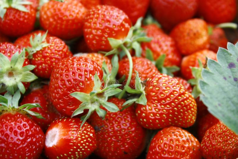Fondo delle fragole mature rosse Bacche mature di estate, primo piano fotografia stock libera da diritti