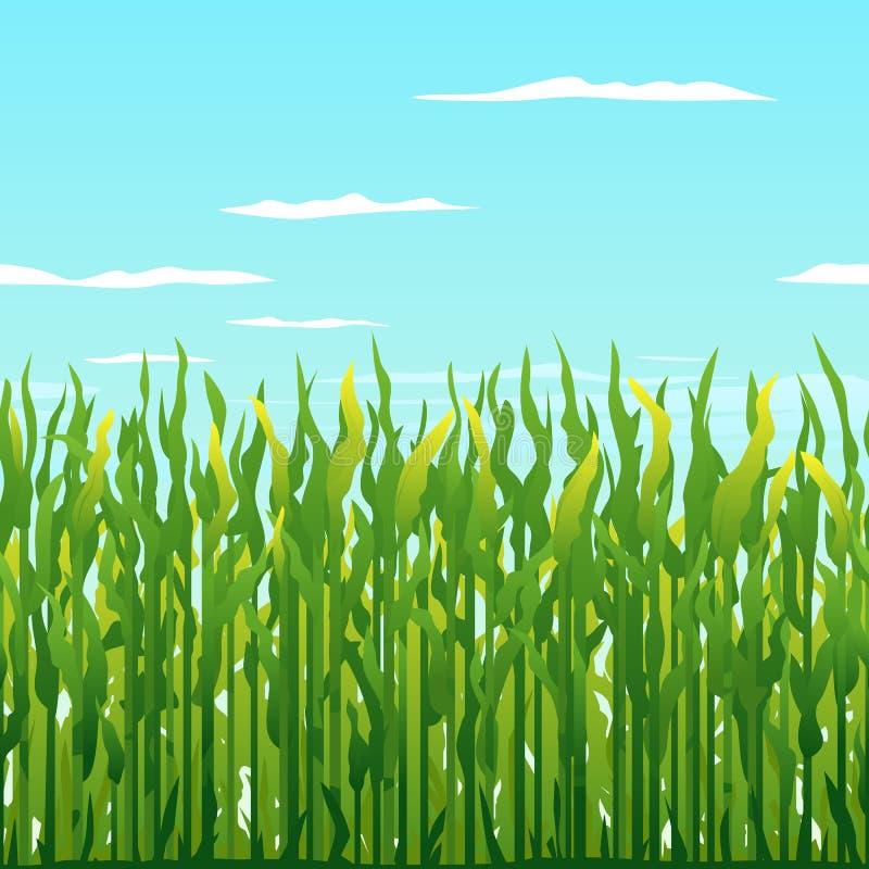 Fondo delle piante di cereale verde royalty illustrazione gratis