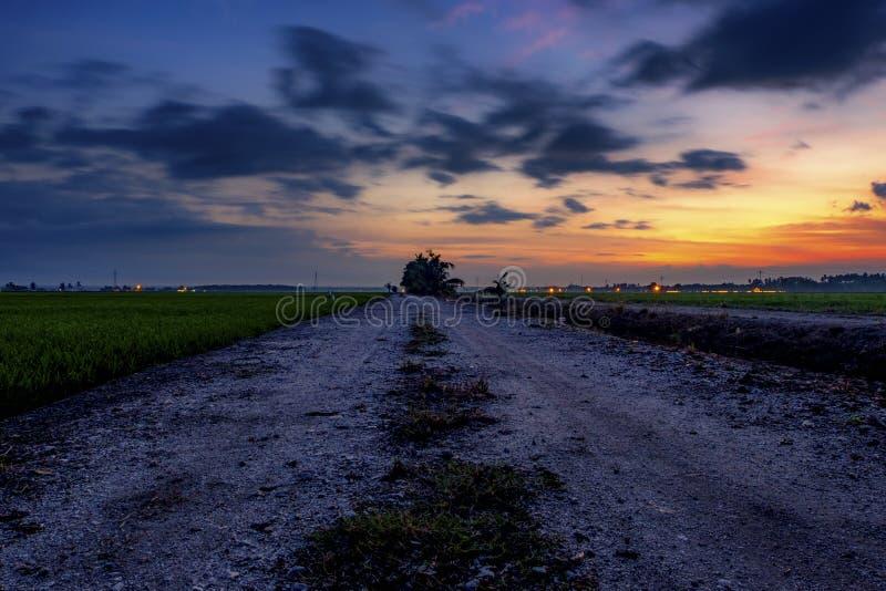 Fondo di alba sopra bello paesaggio del giacimento verde del risone immagine stock libera da diritti