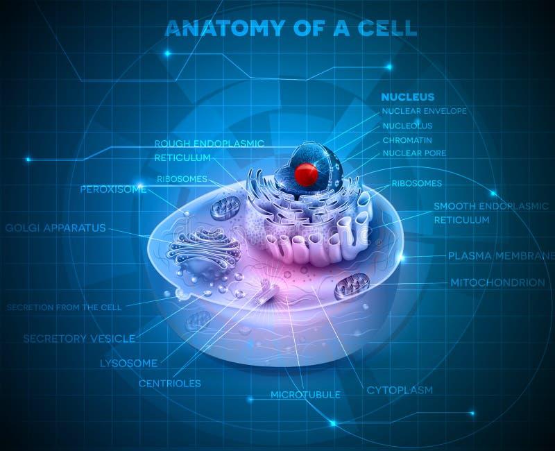 Fondo di anatomia delle cellule illustrazione di stock