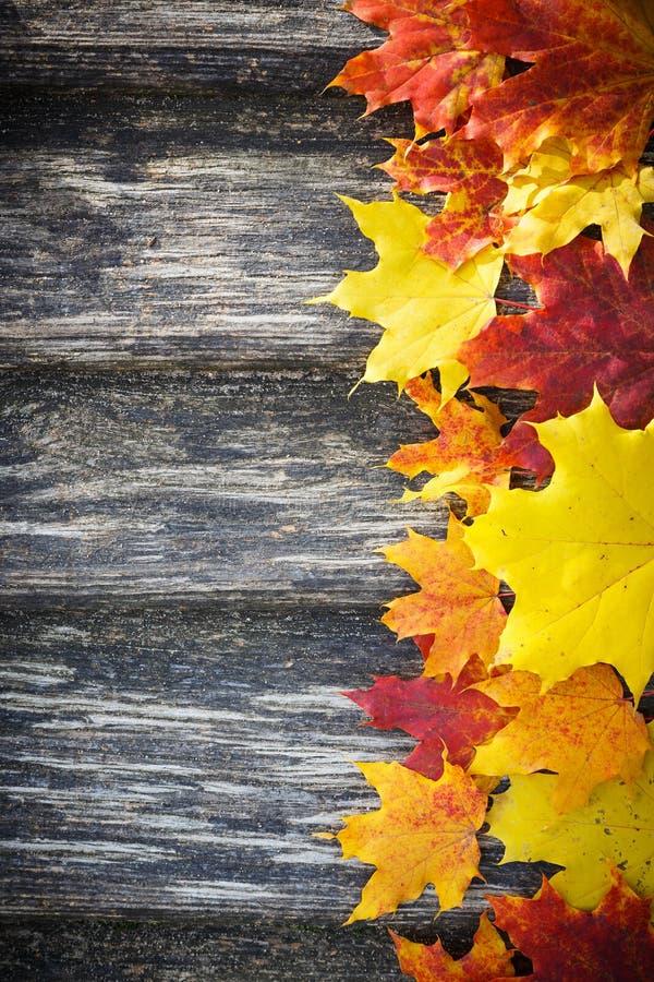 Fondo di autunno immagine stock libera da diritti