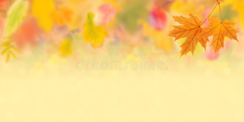 Fondo 004 di autunno fotografia stock libera da diritti