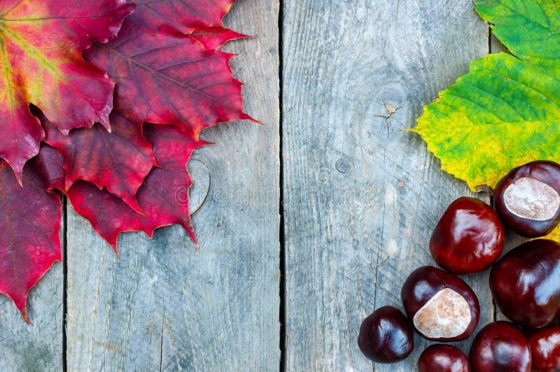 Fondo di autunno con le foglie e le castagne fotografie stock libere da diritti