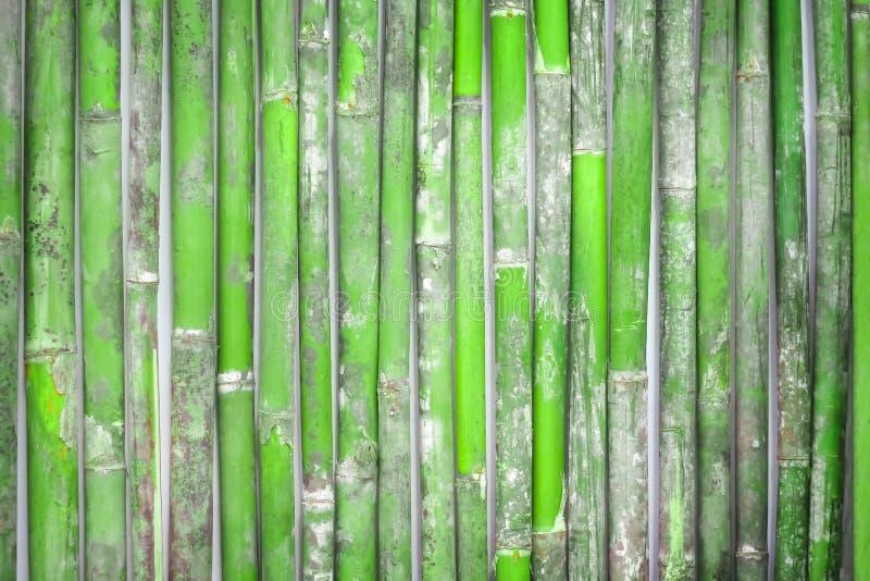Fondo di bambù fresco del recinto, parete di legno fotografie stock