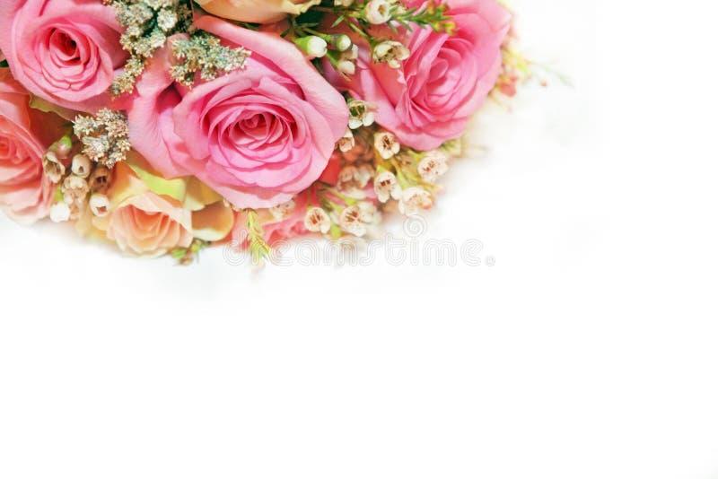 Fondo di bianco di progettazione di arte del fiore di Rosa fotografia stock libera da diritti