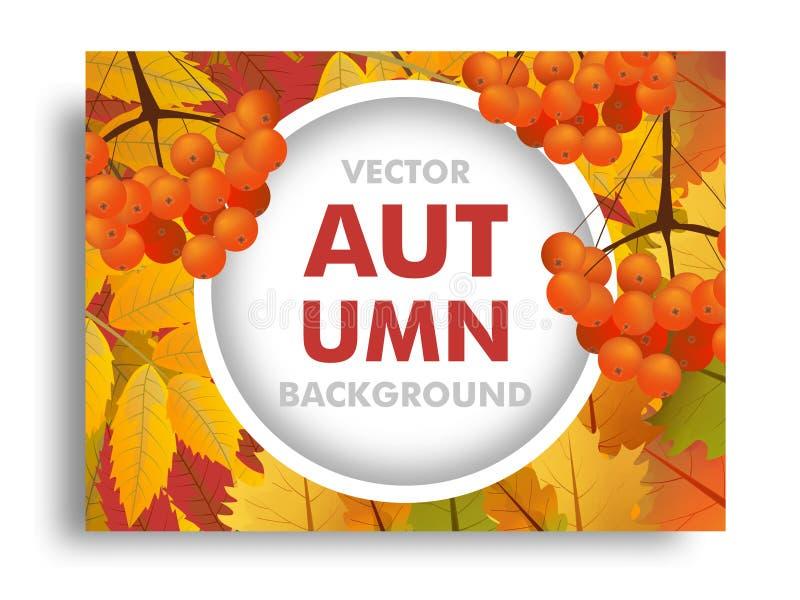 Fondo di caduta o di autunno con il ramo della sorba e delle foglie di acero con spazio per testo Vettore illustrazione vettoriale