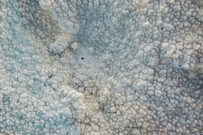 Fondo di corallo blu bianco di struttura fotografia stock libera da diritti