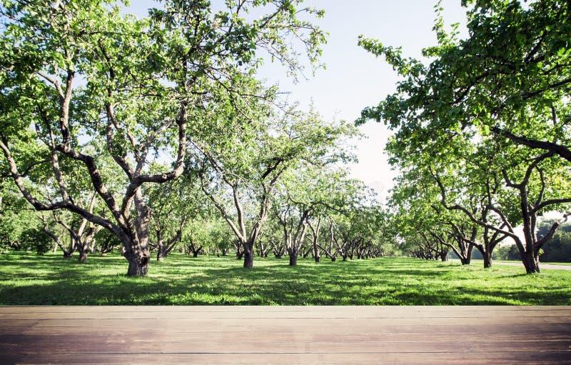 Fondo di ecologia forestale del parco fotografia stock libera da diritti