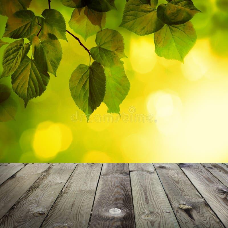 Fondo di estate con Linden Leaves verde, sole Bokeh fotografia stock