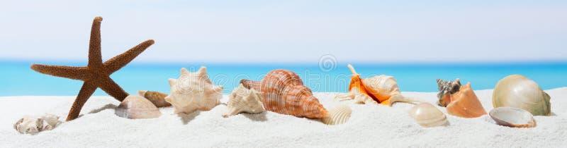 Fondo di estate dell'insegna con la sabbia bianca Conchiglia e stelle marine sulla spiaggia immagine stock