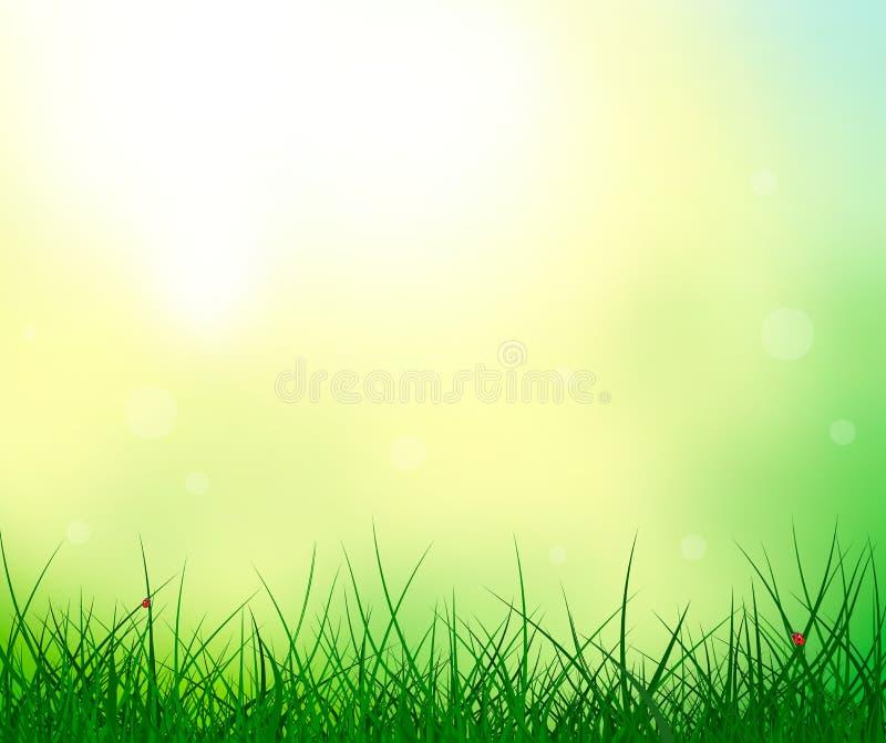 Fondo di estate della coccinella del sole del cielo dell'erba illustrazione vettoriale