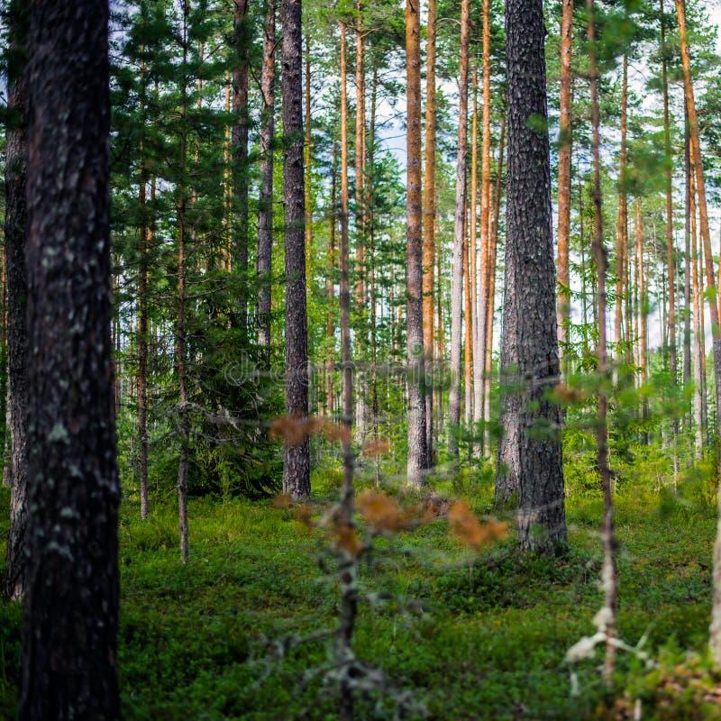 Fondo di estate di ecologia bello fotografia stock