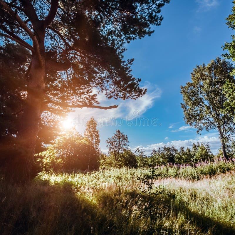 Fondo di estate di ecologia bello fotografia stock libera da diritti