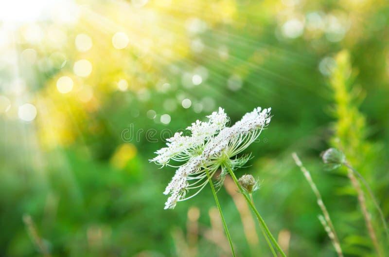 Fondo di estate nei raggi di luce solare immagini stock