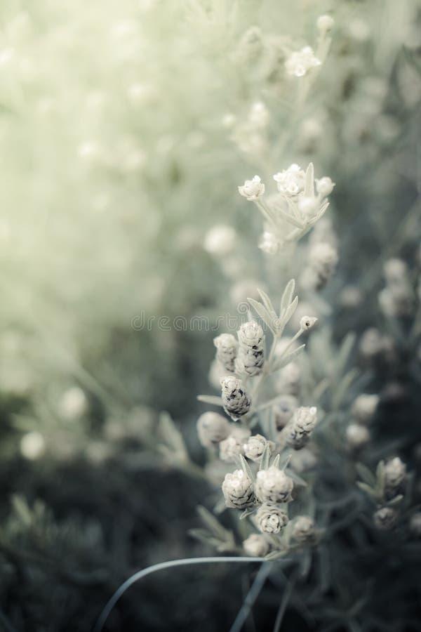 Fondo di fioritura molle della pianta con la tonalità verde fotografia stock